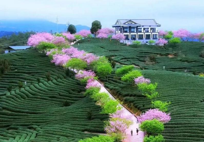 在福建省漳平市永福镇的台湾农民创业园过年