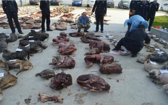 有的人為什麼要吃野生(sheng)動物?