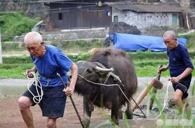 我农民今年65岁了拖着病体还得下田种地,不然就没有饭吃,请问