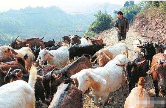在农村搞养殖行业怎么样?