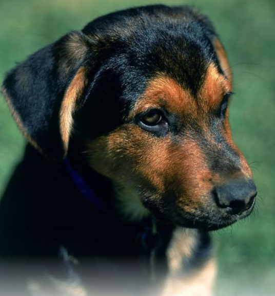 狗为什么死的时候会找个没人的地方?